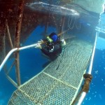 Commercial Scuba Diving Accident Laywer